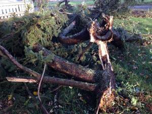 Woodburn Tornado 3